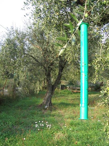 Mouche de l olive ol iculture biologique - Insecticide mouche de l olive ...