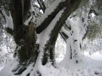 Danser sous la neige